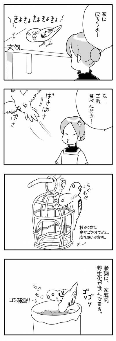 サザナミ漫画31