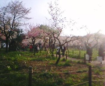 hanami1.jpg