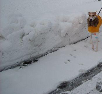 雪国コート最終4