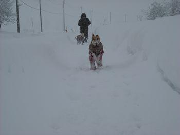 新雪走る1
