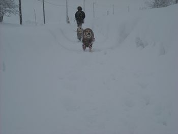 新雪走る2