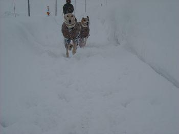 新雪走る3
