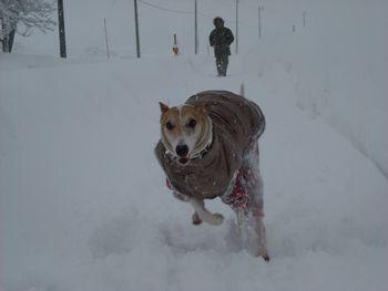 新雪走る4