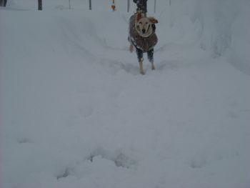 新雪走る5