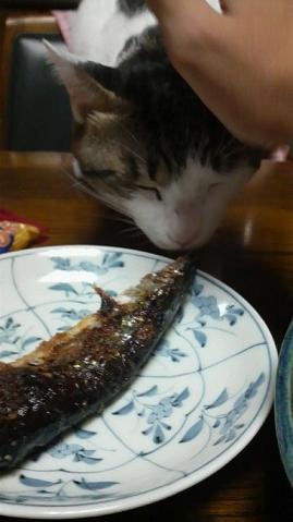 魚を狙って