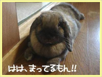 健気で可愛い!!
