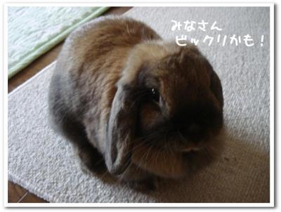 ビックリこゆちゃん!