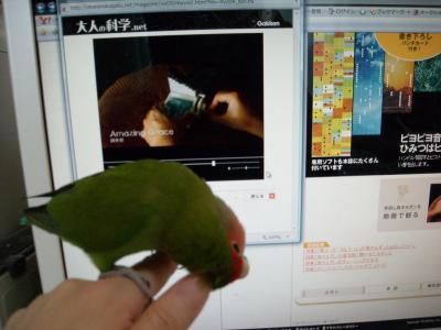 DSCN2159_convert_20090627103843.jpg
