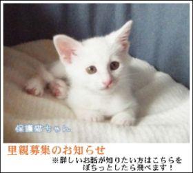 hogoneko.jpg