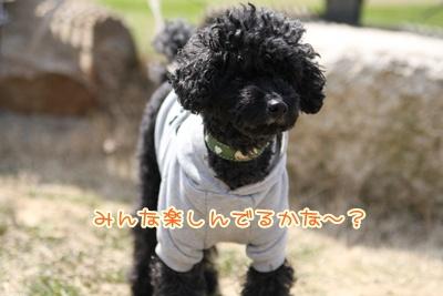 10_20090331003955.jpg