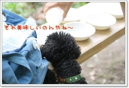 10_20090601203742.jpg