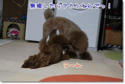 11_20090406225144.jpg