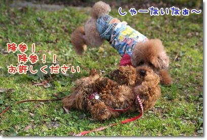 12_20090405225429.jpg