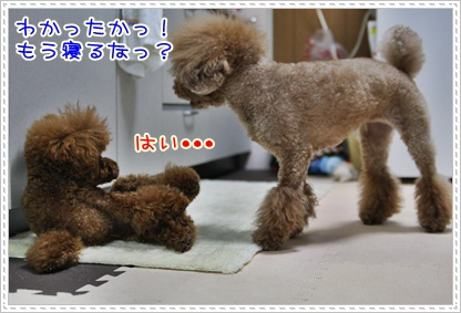 12_20090518194640.jpg