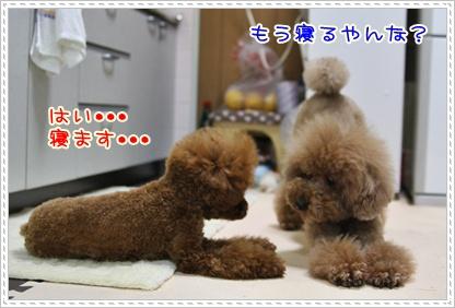 13_20090518195937.jpg