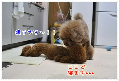 14_20090518195937.jpg