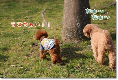 15_20090405225430.jpg
