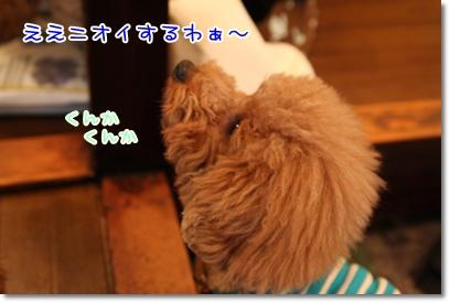16_20090331004212.jpg