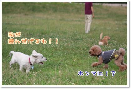 17_20090712224941.jpg