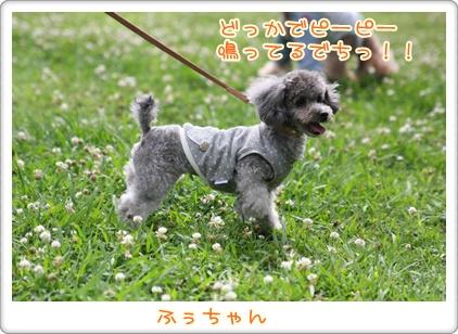 19_20090707204159.jpg
