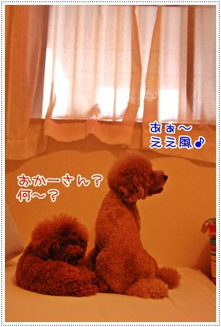 1_20090713232756.jpg