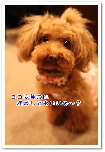 23_20090429135401.jpg