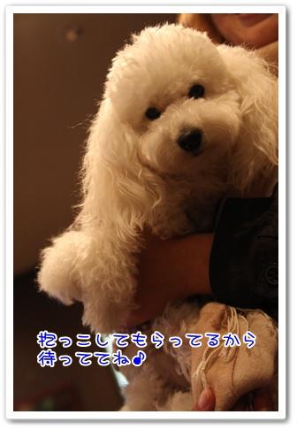 26_20090429140401.jpg