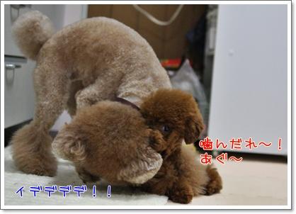 2_20090325194701.jpg