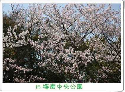 2_20090413194124.jpg