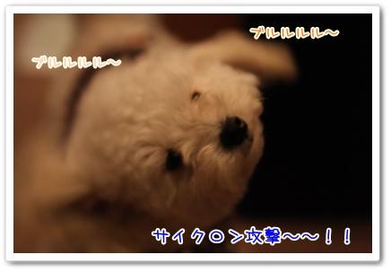 2_20090429144947.jpg