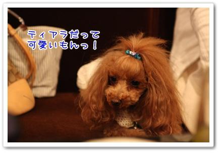 30_20090429140401.jpg