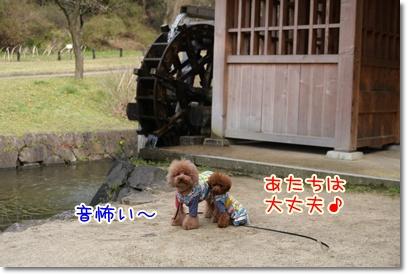 3_20090405222732.jpg