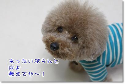 3_20090420190847.jpg
