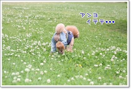 3_20090510230716.jpg