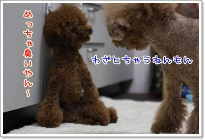 3_20090527203155.jpg