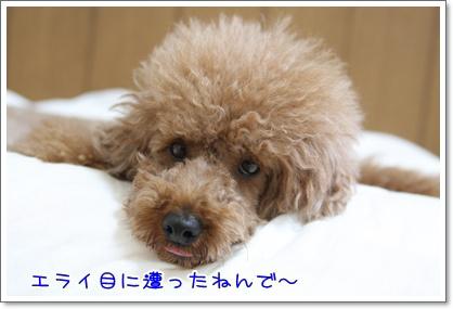 3_20090621205919.jpg