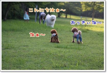 3_20090629225132.jpg