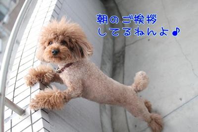 4_20090309191314.jpg