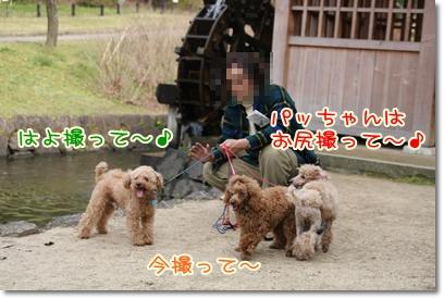 4_20090405222732.jpg
