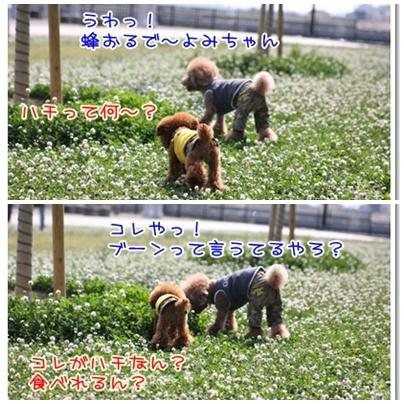 4_20090608235336.jpg