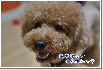 4_20090720012335.jpg