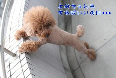 5_20090309191325.jpg