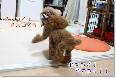 5_20090613005802.jpg
