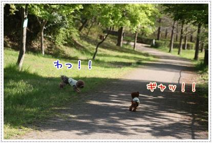 6_20090418234857.jpg