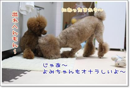 6_20090527203155.jpg