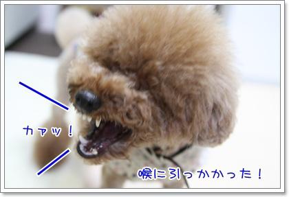 6_20090616203426.jpg