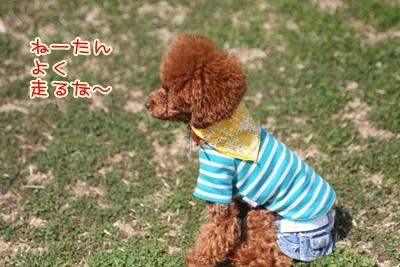 7_20090331003843.jpg