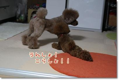 7_20090406225143.jpg