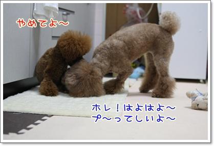 7_20090527204142.jpg