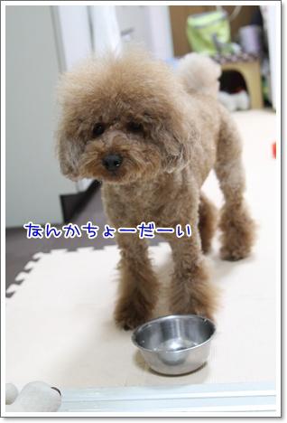 7_20090603192606.jpg